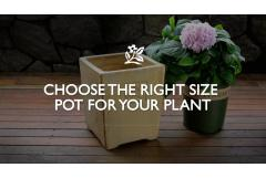 Right Size Pot For Your Plant