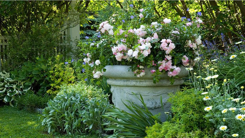Romancing the Roses