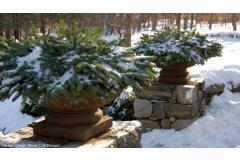 Winter Containers For a Seasonal Statement