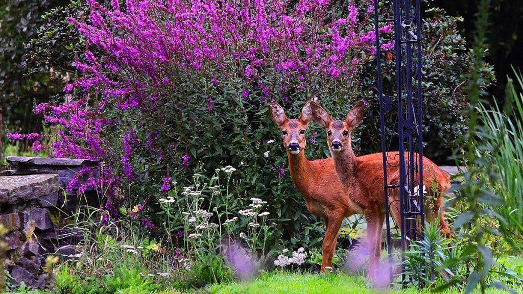 18 Beautiful Deer Resistant Shrubs
