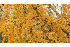 5 Small Trees for Fall Color