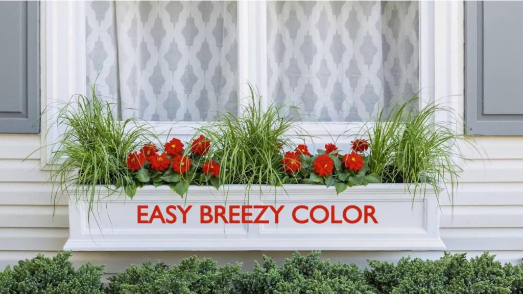 Easy Breezy Window Box with Color