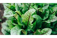 8 Plants You Probably Didn't Know You Can Eat