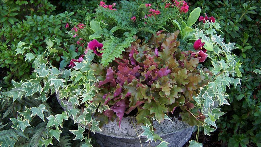 Fresh Ideas for Fall Containers