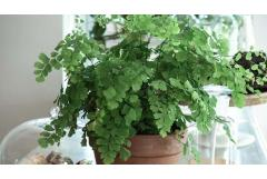 8 Ferns You Can Grow Indoors