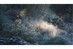 The Magic of Frost