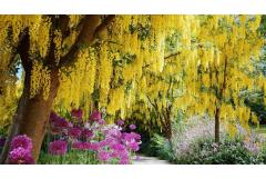 Top 13 Flowering Trees for Small Gardens
