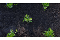 Easy Way to Plant a Groundcover