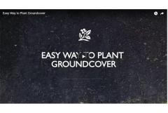 Video: How to Plant Groundcovers