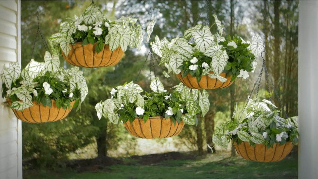 How to Design with Hanging Baskets