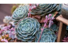 Succulents: Designing With Moody Pales