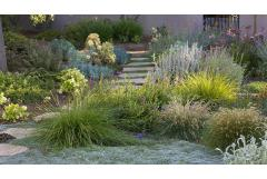 flagstone pathway with groundcover in foreground and fescue grass, lambs ear, beardtongue, blue chalksticks, and lavender in background