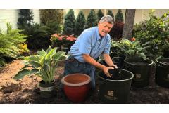 How to Plant Container Hostas