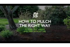 How to Mulch