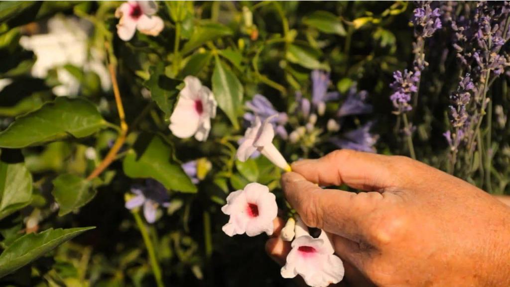 How to Plant Butterfly and Hummingbird Wildflower Gardens