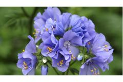5 Perfect Plants for Full-Shade Color (Z: 3 - 7)