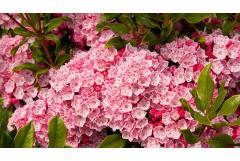 Best Shrubs to Attract Pollinators (Southeast)