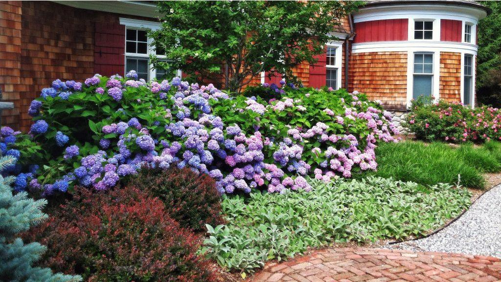 Mid Sized Shrubs For A Layered Border Be Inspired