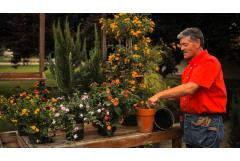 How to Fertilize Lantana
