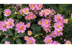 5 Perennials to Plant Right Now