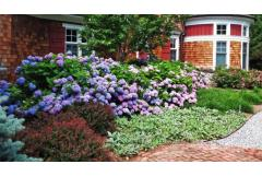 Mid-Sized Shrubs For A Layered Border