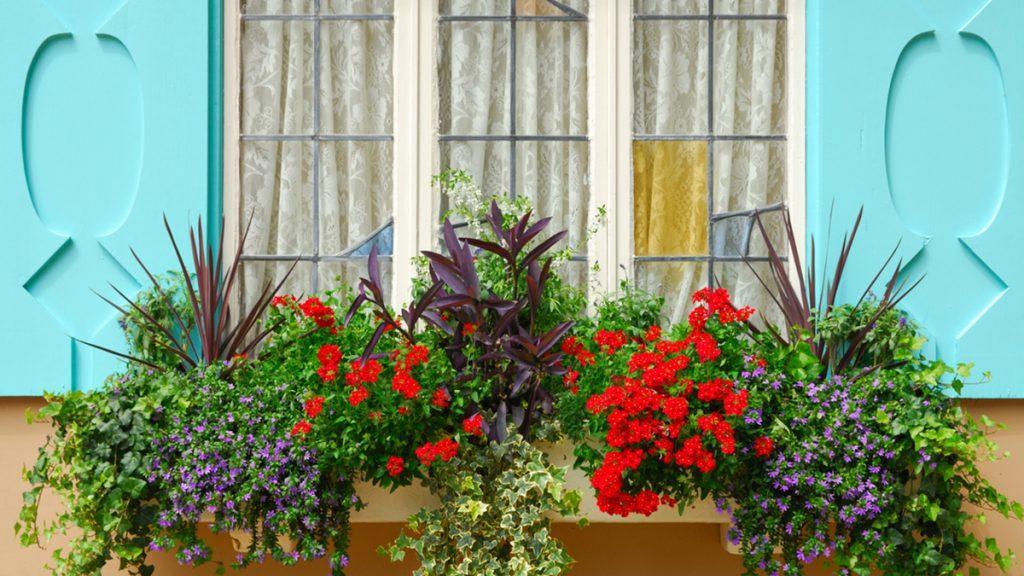 Second Story Window Box Plant Ideas