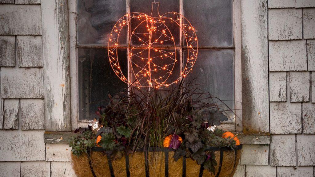 Plant a Halloween Window box (in 30 minutes flat)!