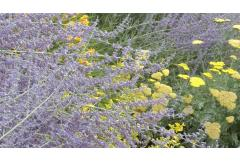 Best Shrubs to Attract Pollinators (Midwest)