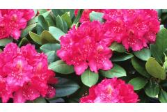 5 Shrubs That Look Great in April (Z: 3 - 7)