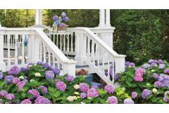 10 Things Hydrangea Lovers Should Know