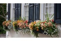 15 Fresh Ideas for Summer Windowboxes