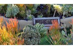 5 Ways to Design with Succulents