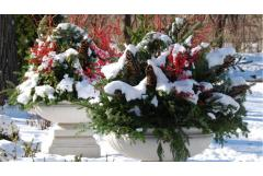 Winter Container Ideas for Cold Zones