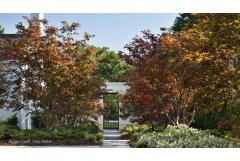 5 Trees for Fall Color (Zones 8 and up!)