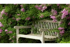 Ask a Craftsman:  Lydia on Lilacs