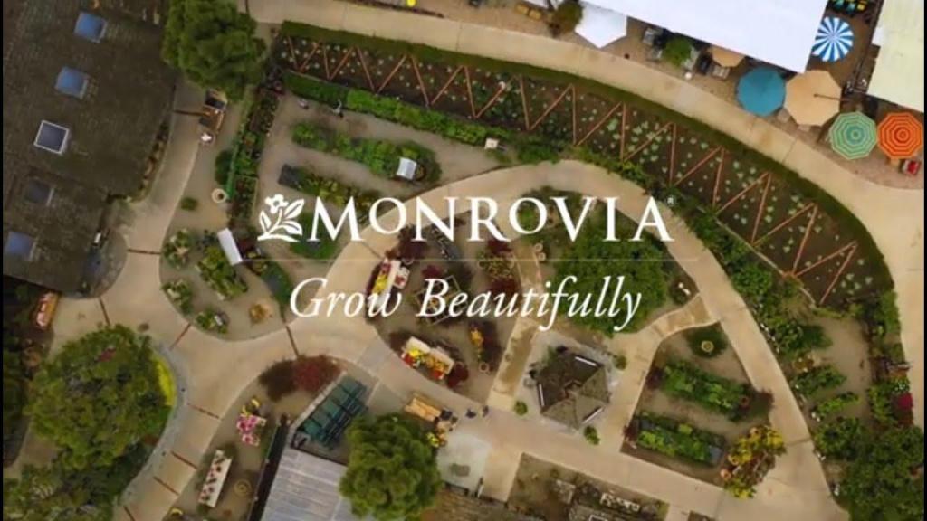 Monrovia Plants | Roger's Garden