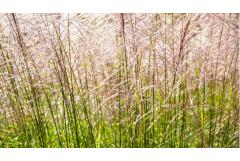 5 Ornamental Grasses Perfect for September