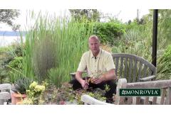 Plant Explorer Daniel J. Hinkley at Windcliff
