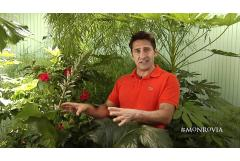 Jamie Durie: Easy Shade Garden
