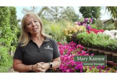 Monrovia Plants | Louie's Nursery