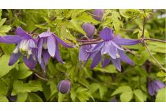5 Perfect Plants for a North-Facing Wall