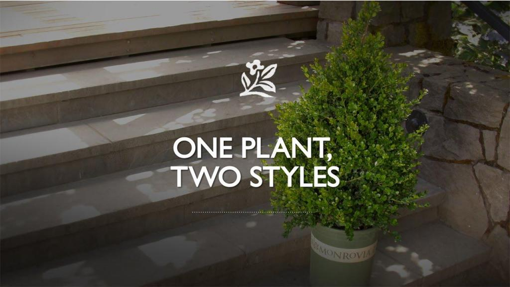 One Plant, Two Container Styles