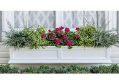 One Windowbox, Three Colorful Combos