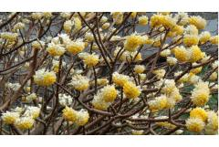6 Shrubs That Look Great in January (Z: 8 - 11)