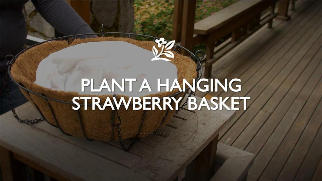 Planting a Hanging Strawberry Basket
