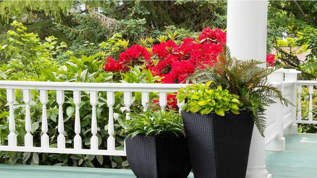 Container Garden Ideas to Beautify Your Favorite Spaces Now