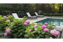 Make a Splash with Poolside Plants (Z: 3 - 7)