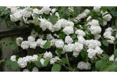5 Great Early Bloom Shrubs (Northeast)