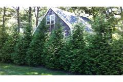 10 Evergreen Shrubs for Privacy (Zone: 3 - 7)