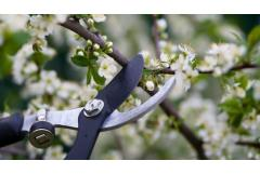 Beginner's Guide to Pruning Flowering Shrubs